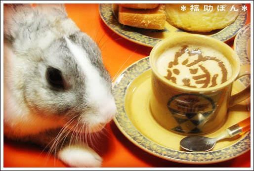 coffee-bunny.jpg