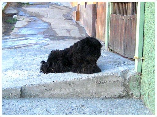 valparaiso-dog.jpg