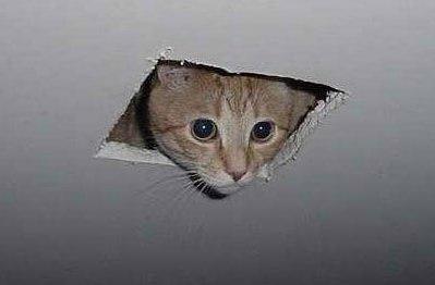 the_ceiling_cat.jpg