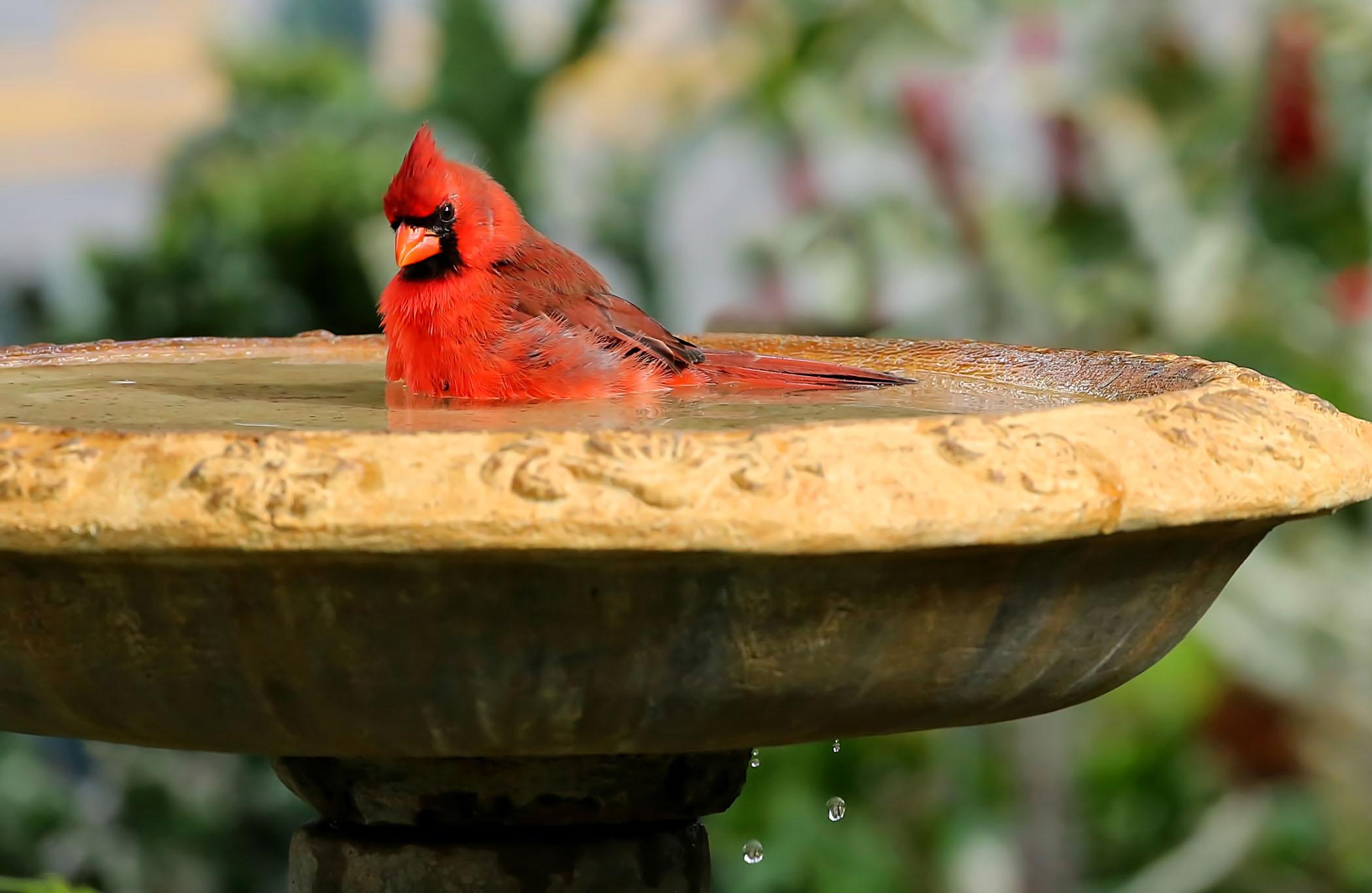 cardinal-bath.jpg