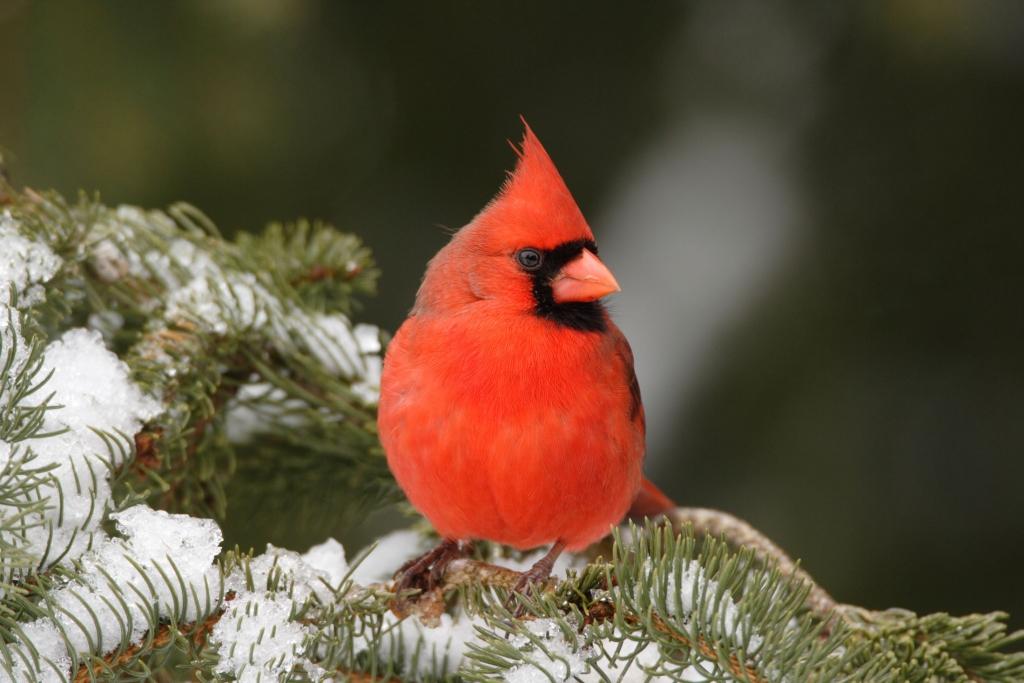 cardinal-2200-1024x683.jpg