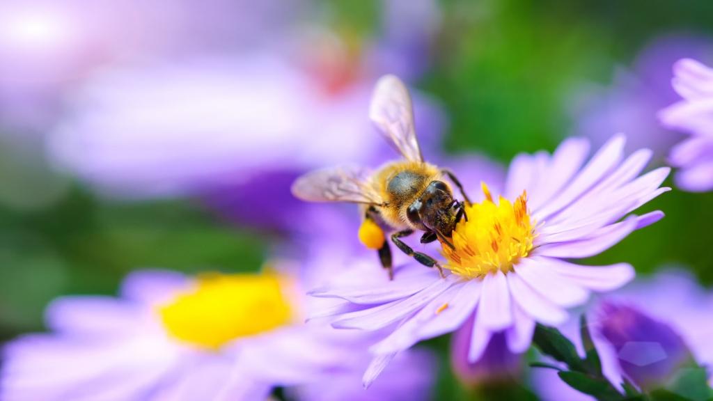 bumblebee-flower-1024x576.jpg
