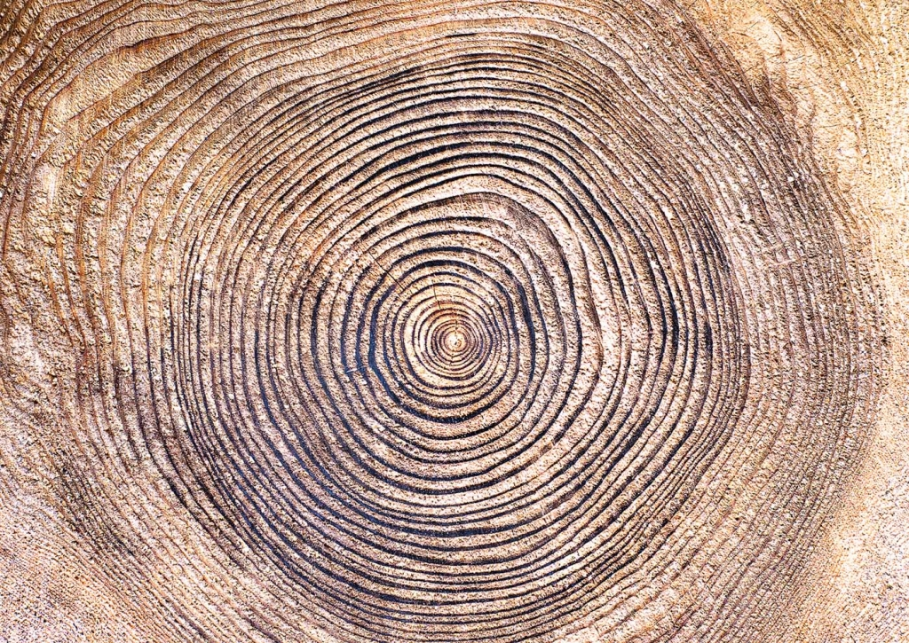 tree-rings-1024x725.jpg
