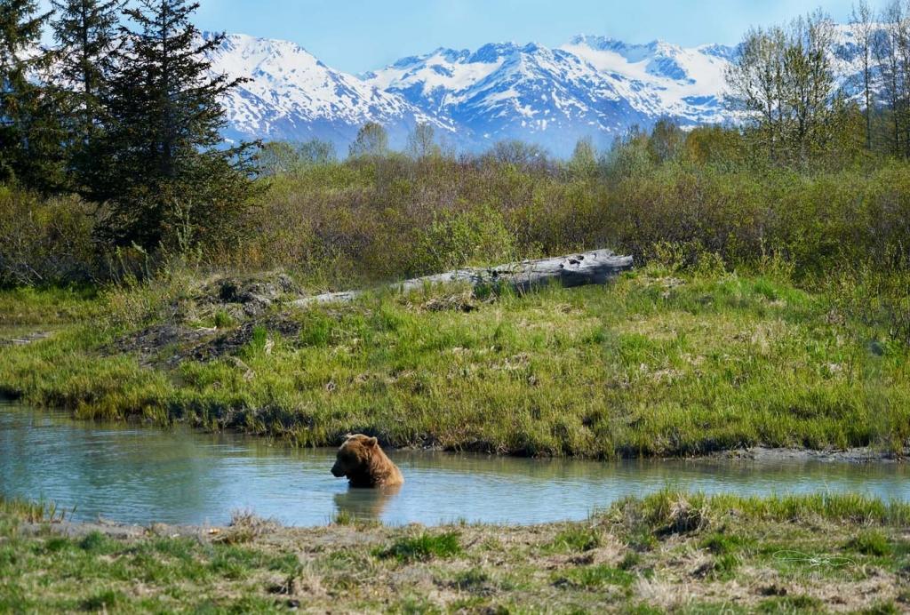 bear-park-1024x692.jpg