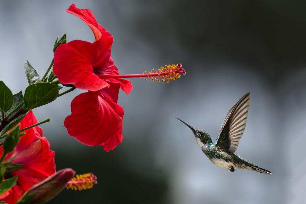 hummingbird-1024x683.jpg