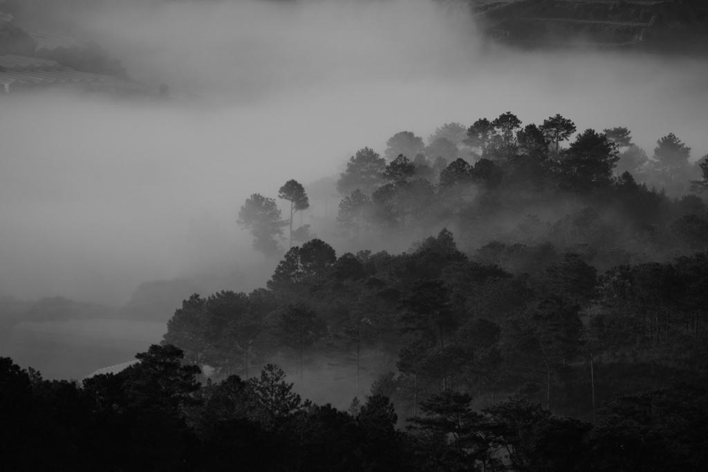 night-dark-forest-1024x683.jpg