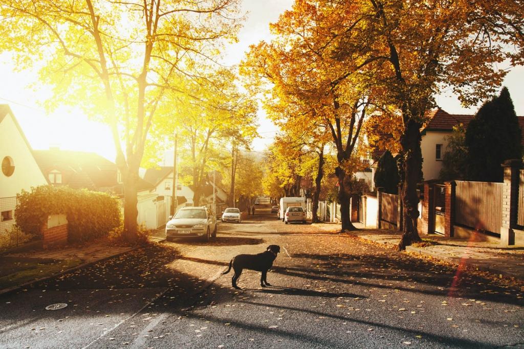 suburbs-1024x683.jpg