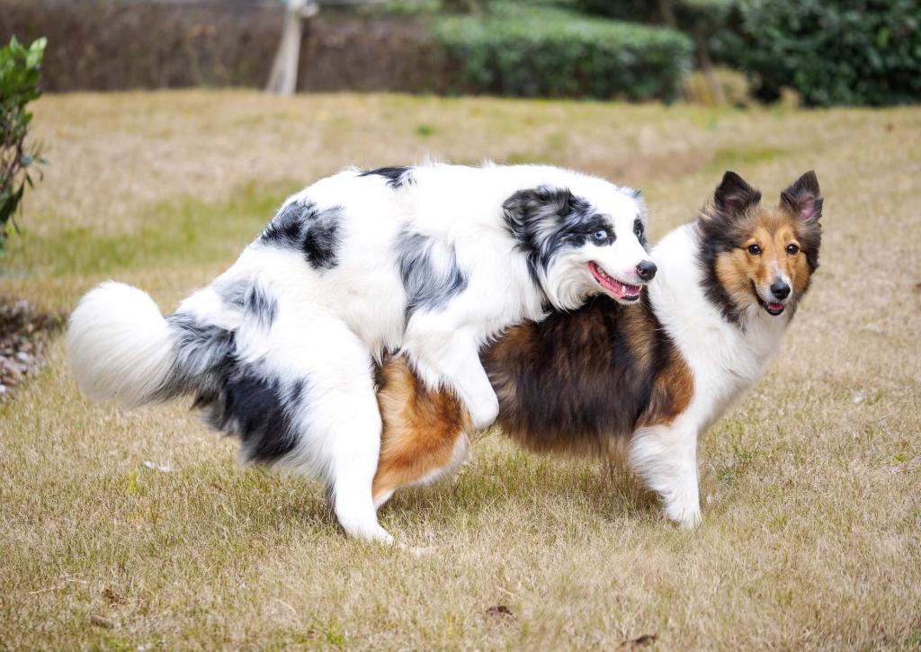 dogs-mating-sex-1024x725.jpg